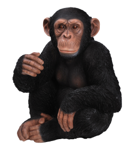 Chimpanzee - Sitting