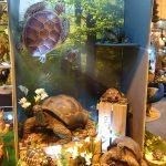 vivid-arts-glee-2016-tortoises