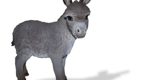 New Donkeys arriving late October