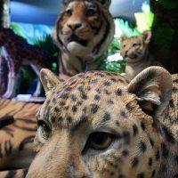 ISLAND 6 and 7 Zoo, Zoo Petpals (26)
